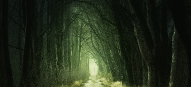 Image of a road leading through a dark forest by Johannes Plenio from Pixabay